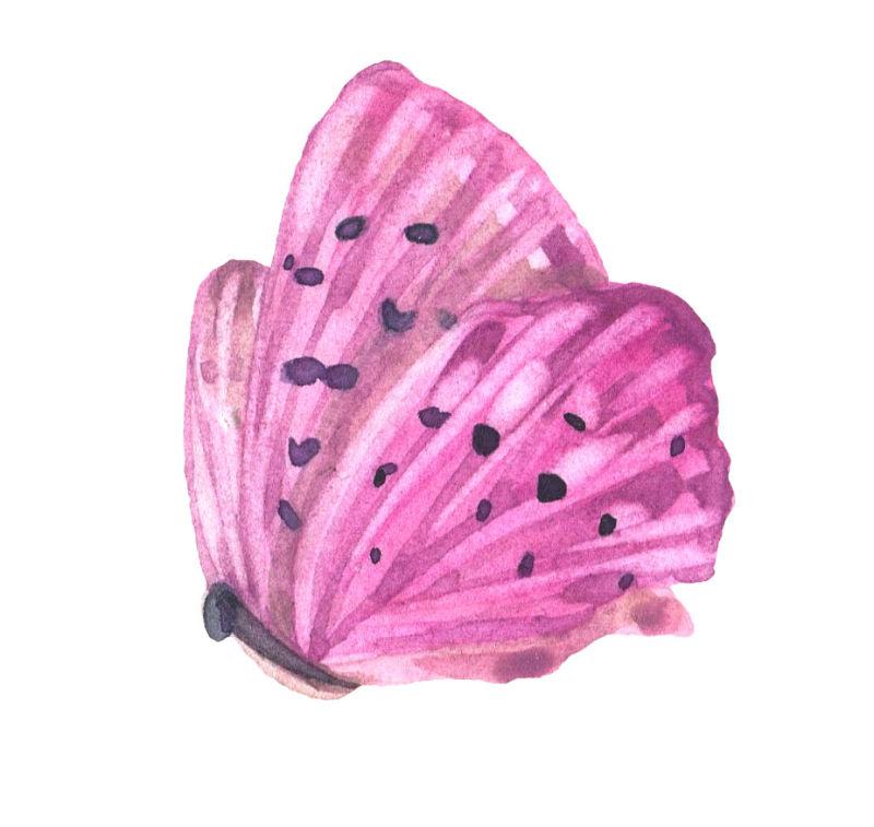 矢量蝴蝶状花朵设计