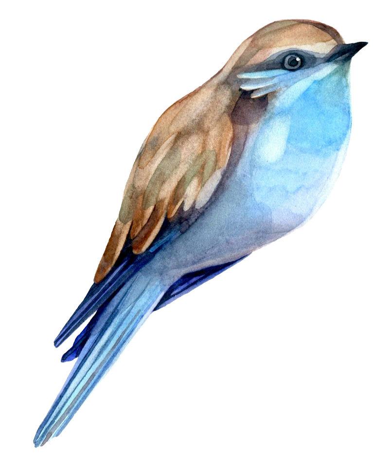 矢量鸟儿彩绘