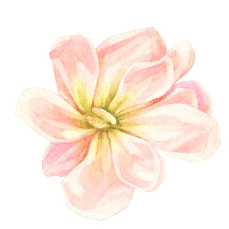 矢量淡粉色花朵设计