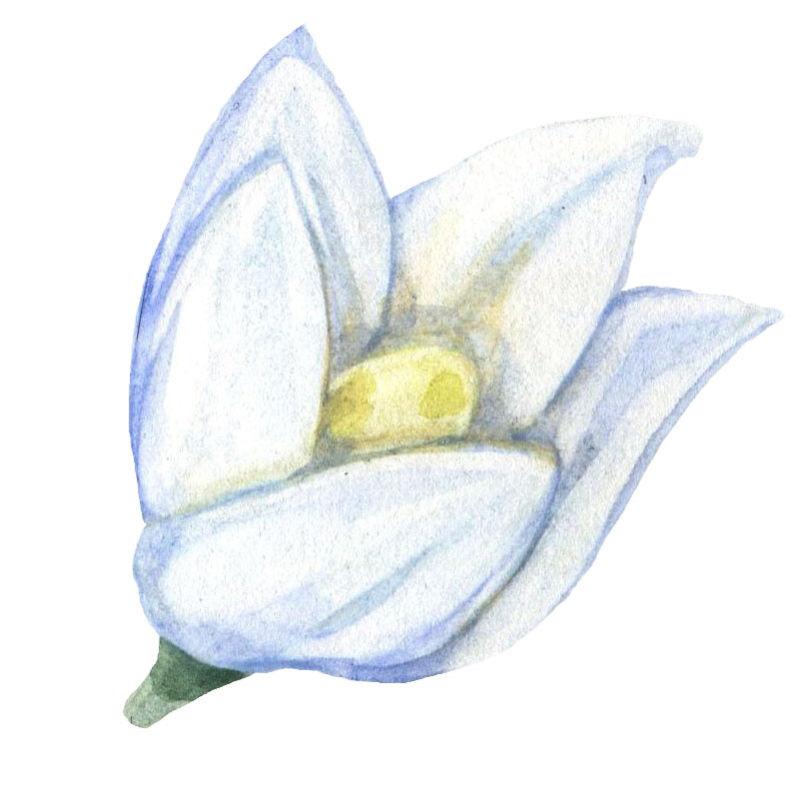 矢量的水彩花朵设计