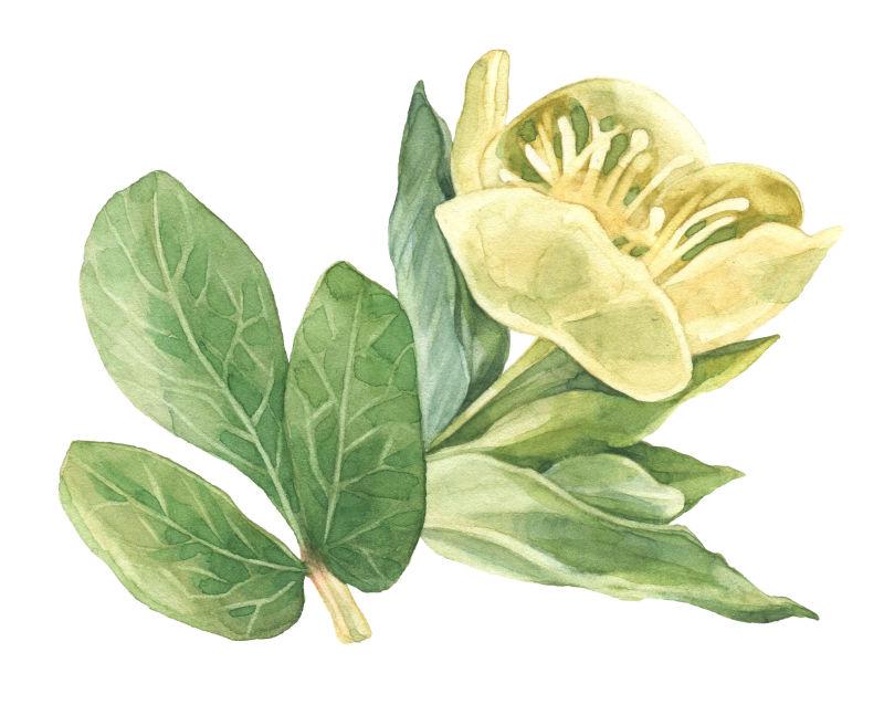 矢量花朵与绿叶
