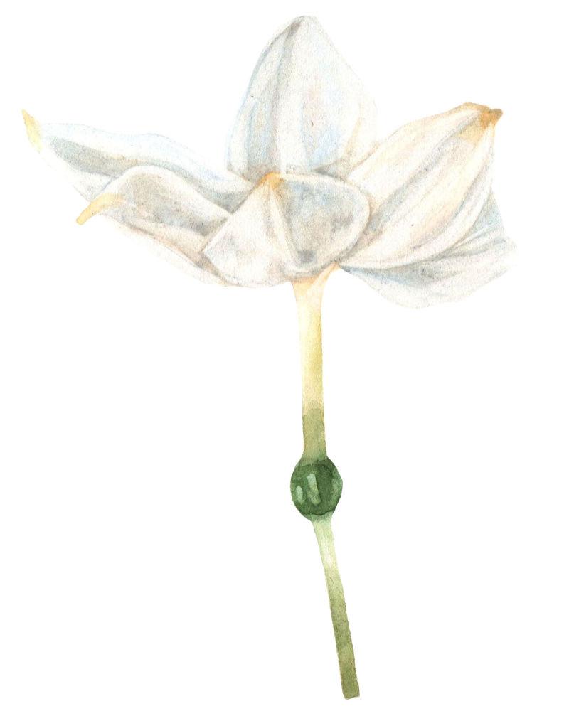 矢量白色绽放的花朵