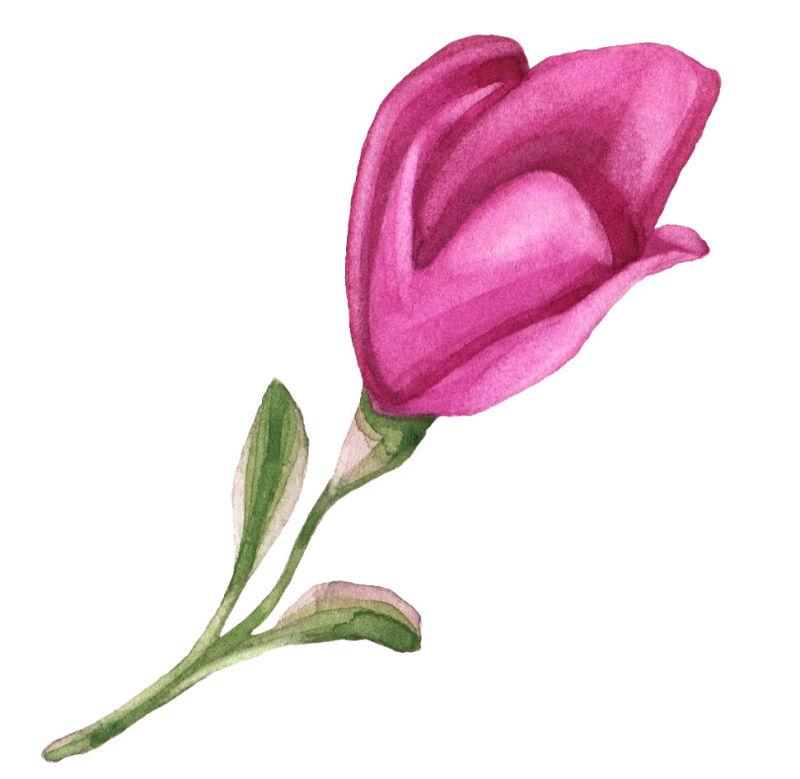 矢量水彩玫粉色花朵设计