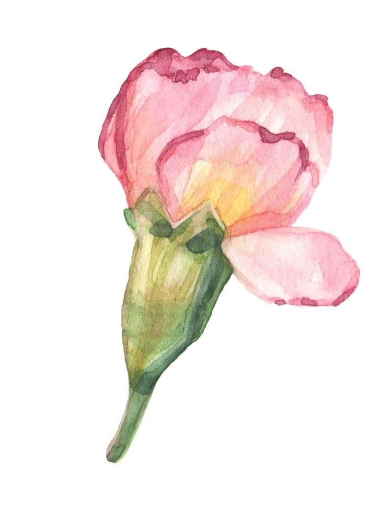 矢量粉色康乃馨设计