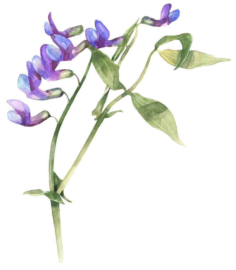 矢量枝条紫色花朵