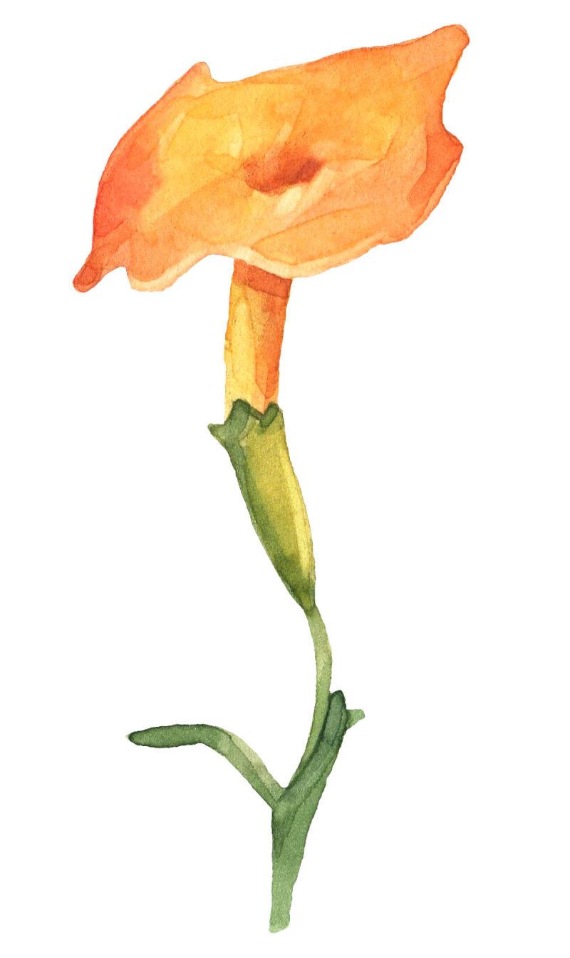 矢量橙色花朵设计
