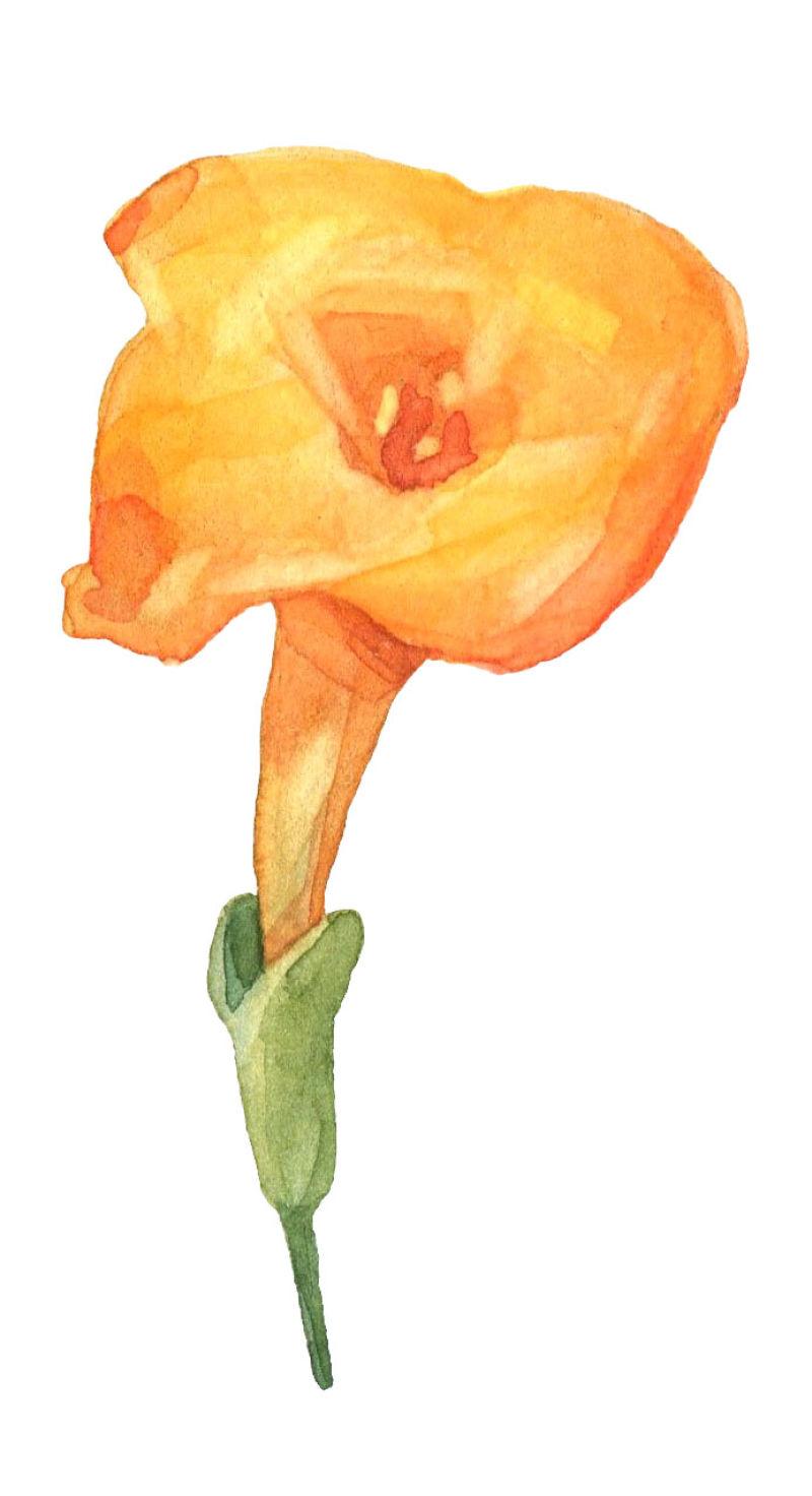 矢量橙色水彩花朵设计