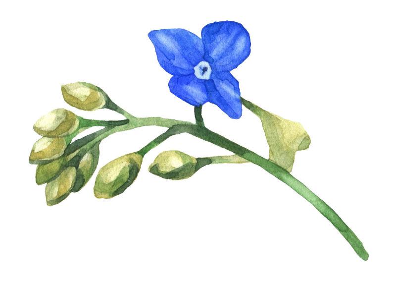 矢量一只花朵水彩设计