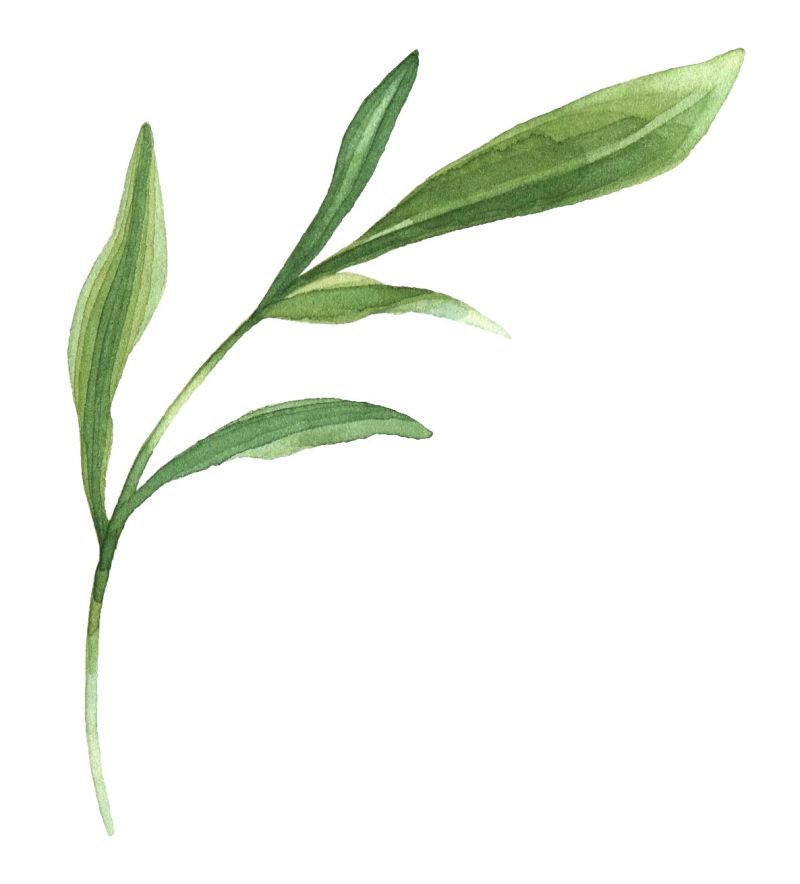 矢量的绿色叶片枝条