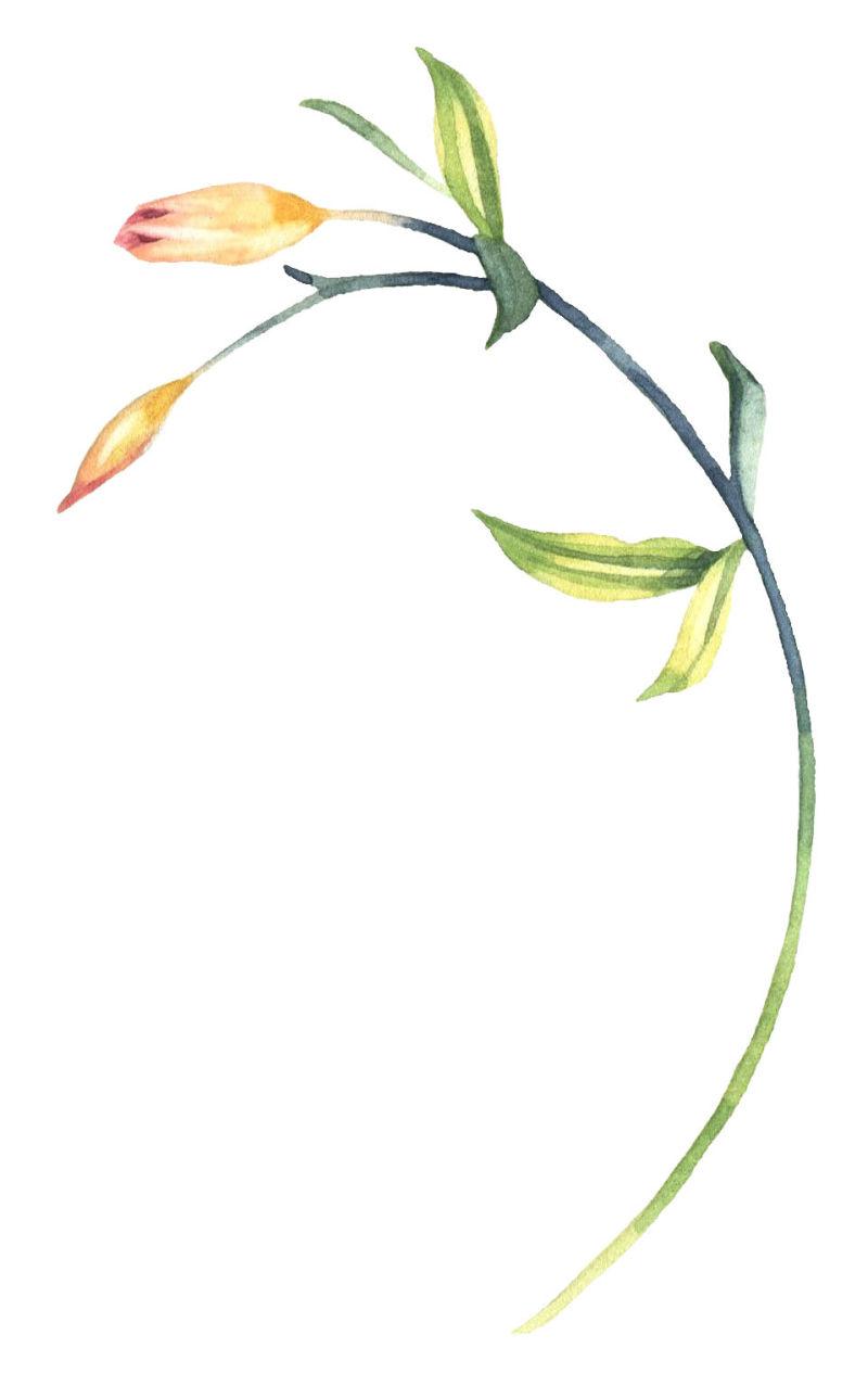 矢量单支花朵与绿叶
