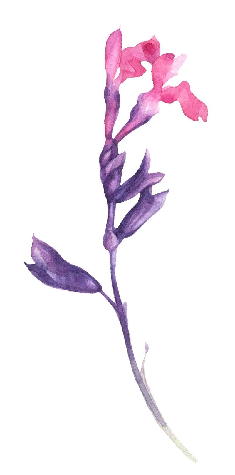 矢量开着花朵的花枝