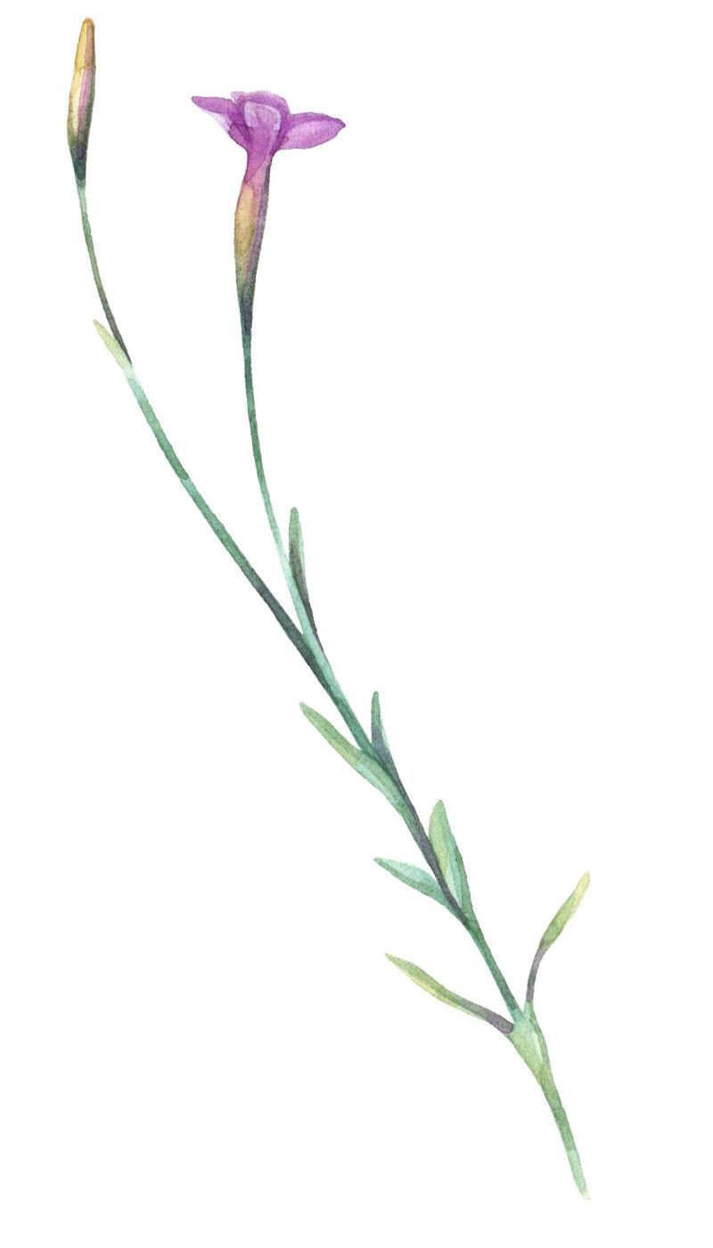 矢量单支花朵