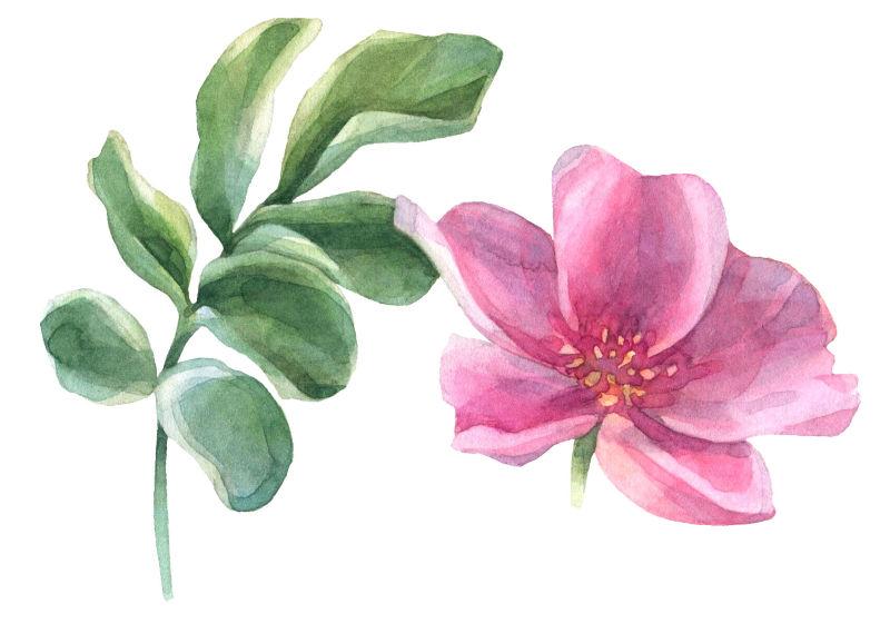 矢量水彩绿叶与粉色绽放的花朵