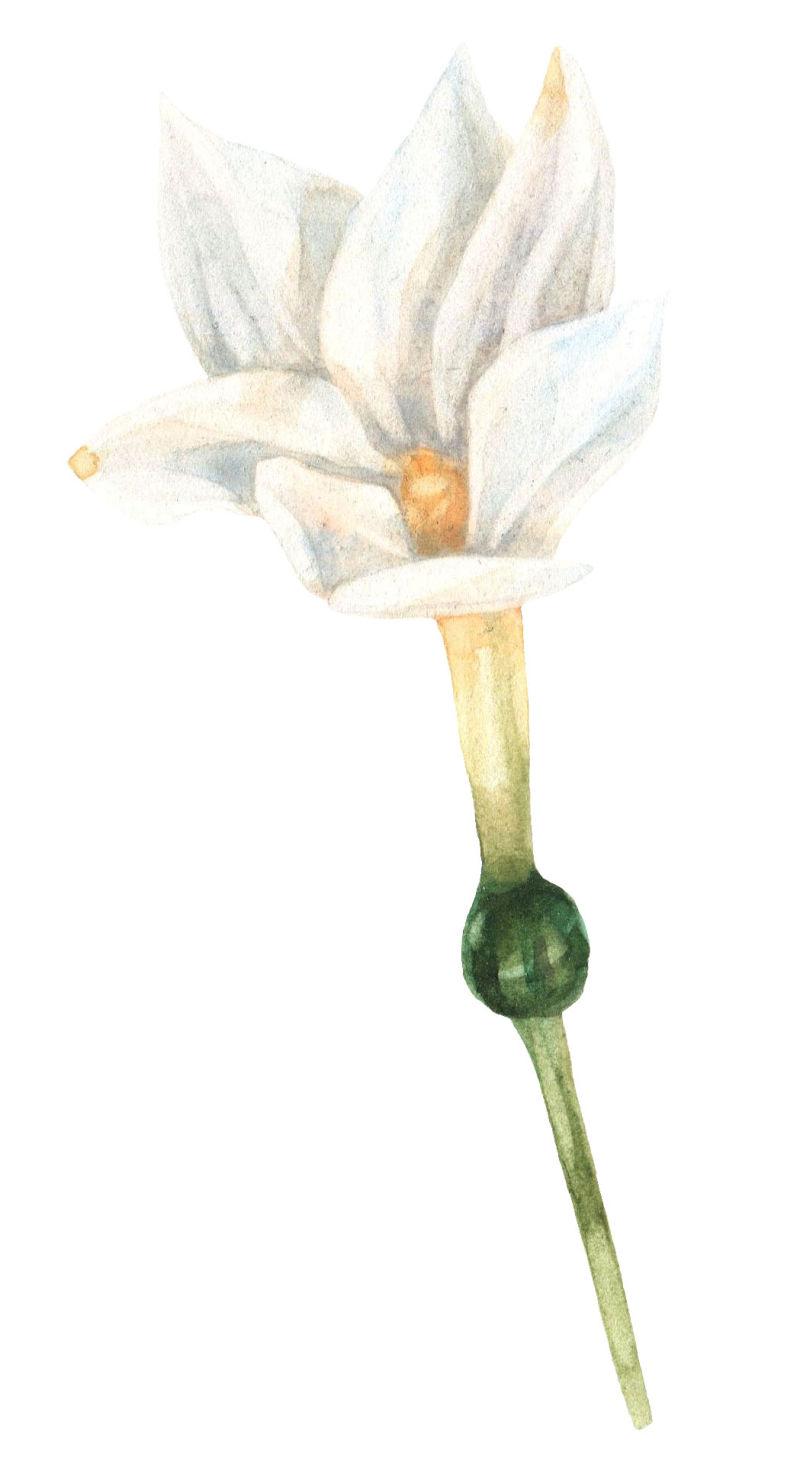 矢量白色花朵设计