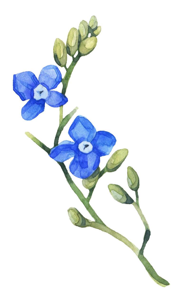 矢量绽放的花朵与花骨朵