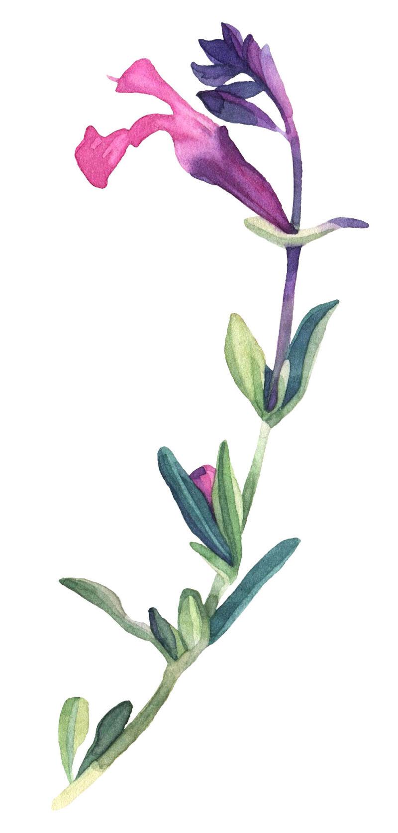 矢量单支花朵绿叶设计