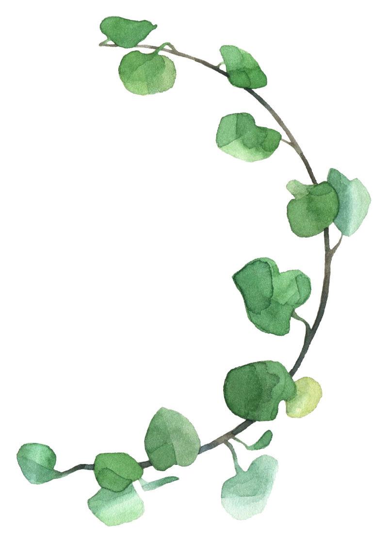 矢量带有叶片的藤蔓