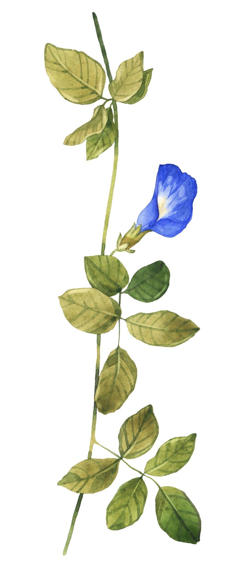 矢量绿色藤蔓上的蓝色喇叭花