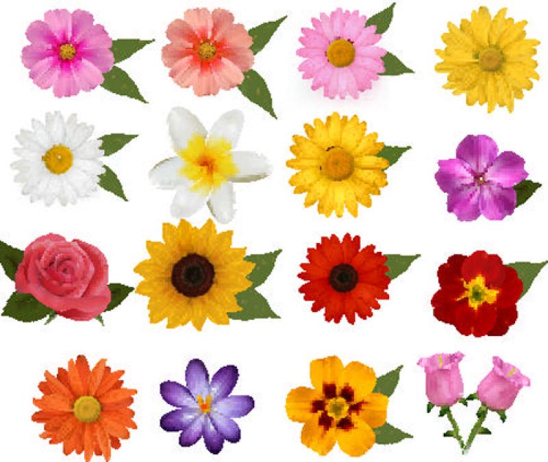 矢量美丽的各种花卉元素设计