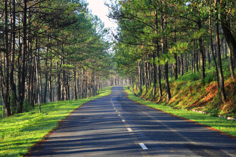森林间的寂静公路