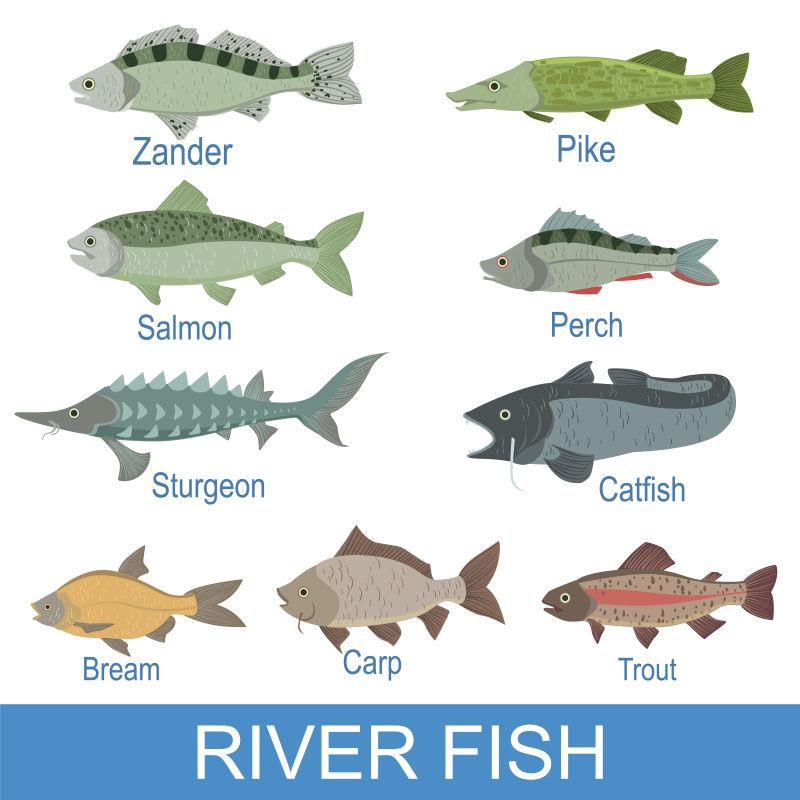 矢量抽象现代鳟鱼图标设计