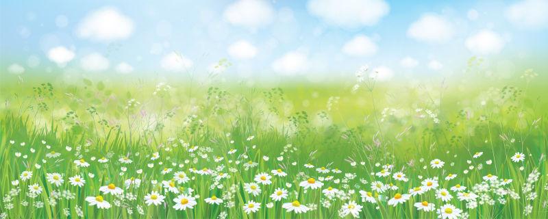 矢量抽象现代春季雏菊元素设计背景