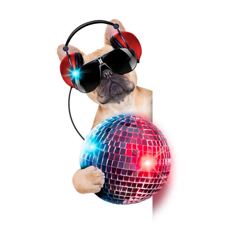 DJ牛头犬-头戴耳机-手持迪斯科舞厅球-除了白色横幅或标语牌外-单独放在白色背景上听音乐