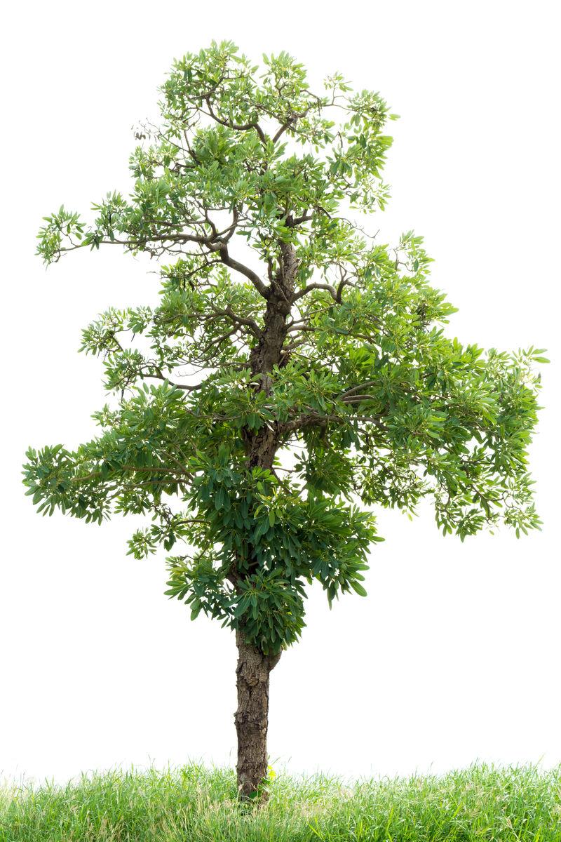 白底绿草树