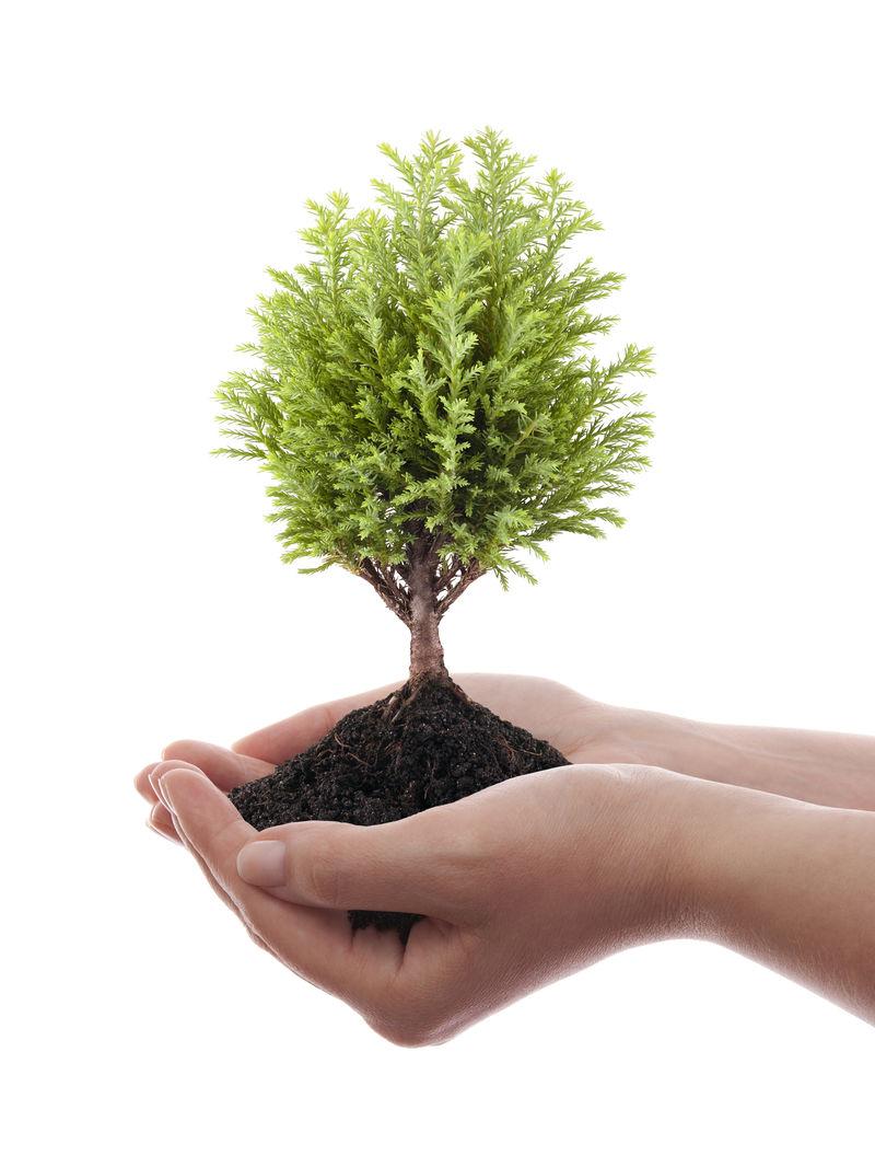 在白色背景下生长的绿树