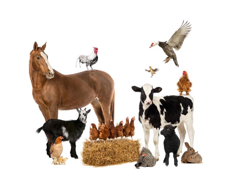 农场动物群