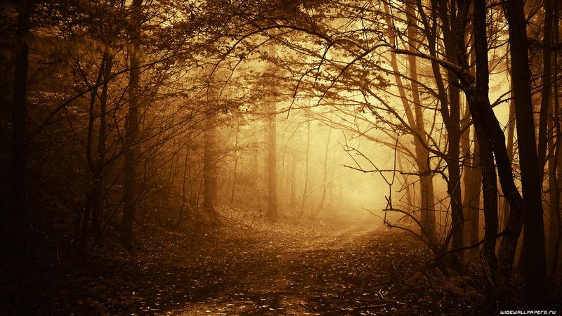秋天-温暖的阳光落在黑暗的森林里的一条路上