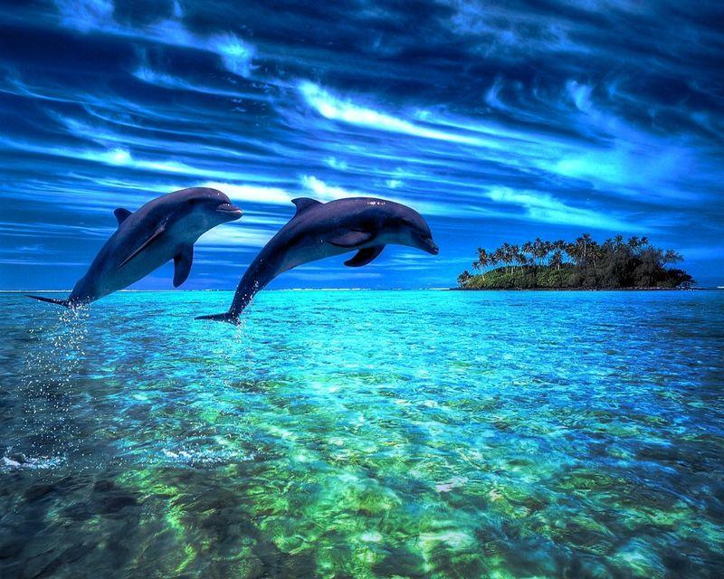 表演时两只海豚跳出池水-论坛报与观众