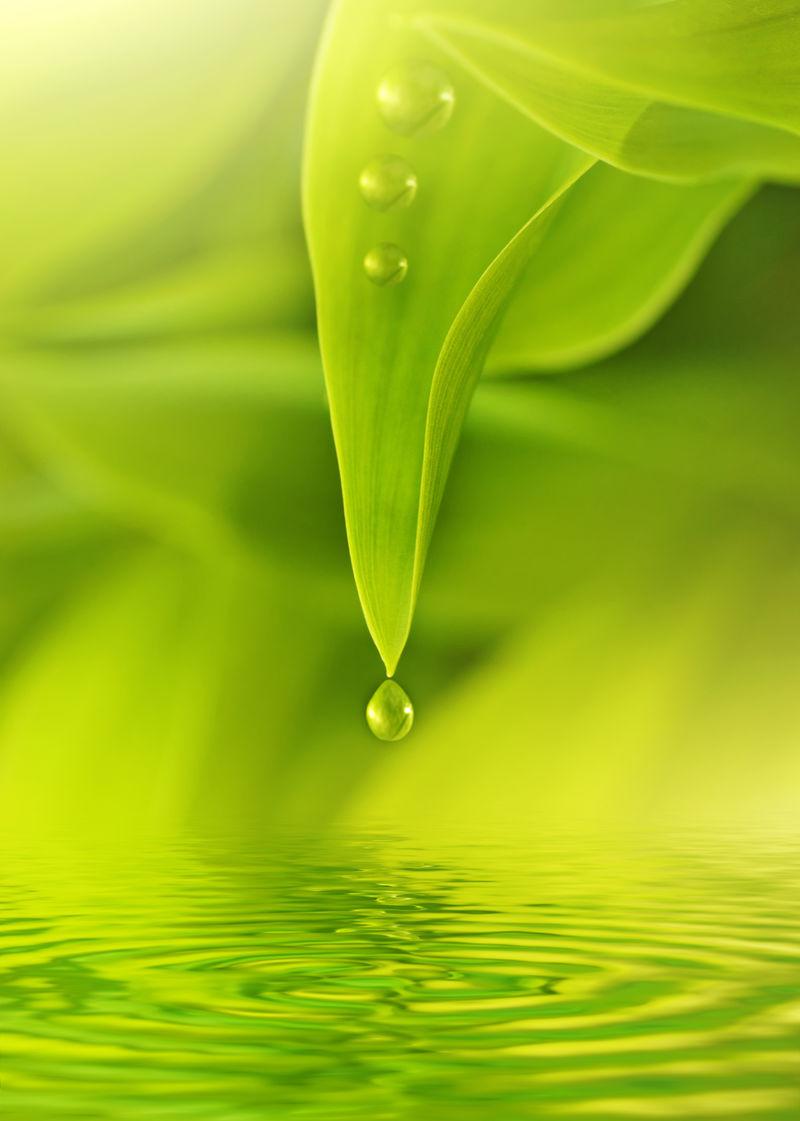 新鲜的绿叶上有水滴
