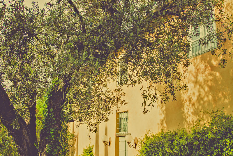 在茂密的树丛和灌木之间有窗户的古老的黄色建筑的美丽风景浪漫的看法-漂亮房子院子里的风景花园