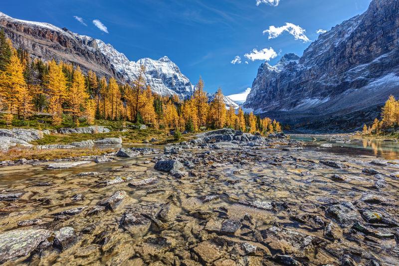 秋天在欧巴宾高原,高山上有金色的落叶松树,在加拿大不列颠哥伦比亚省的尤霍国家公园的奥哈拉湖的偏远地区徒步旅行。