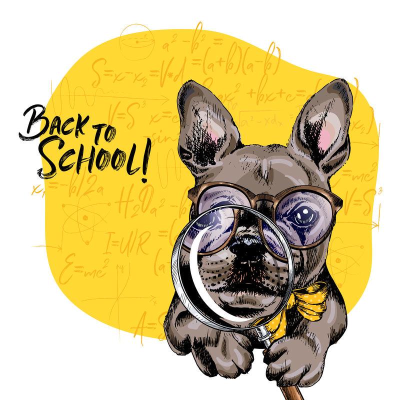 带放大镜和大鼻子倒影的法国斗牛犬矢量图。回到学校的插图。后台的数学公式。手绘宠物门。学习海报,学生动画片。