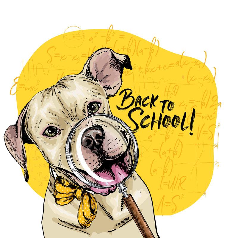 带放大镜和大鼻子反射的斗牛犬矢量图。回到学校的插图。后台的数学公式。手绘宠物门。学习海报,学生动画片。