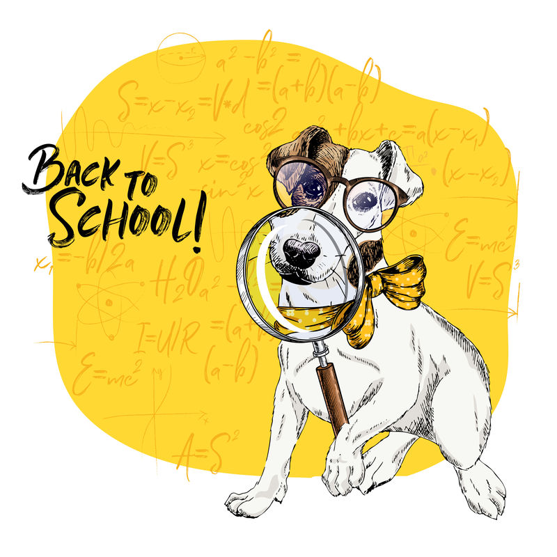带有放大镜和大鼻子倒影的杰克·拉塞尔梗犬矢量图。回到学校的插图。数学公式背景。手绘宠物门。学习海报,学生动画片。