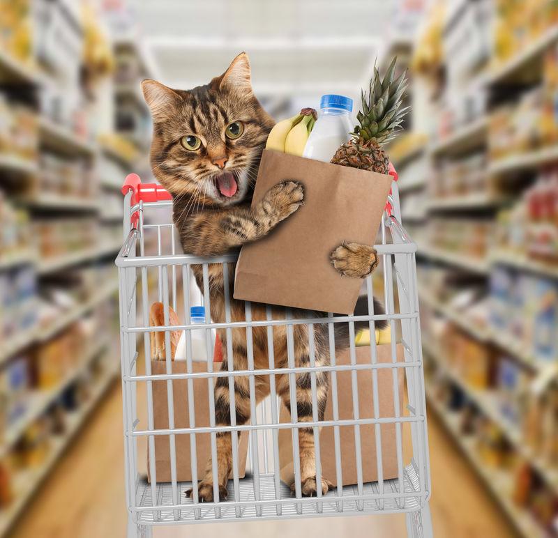 商店里的滑稽猫