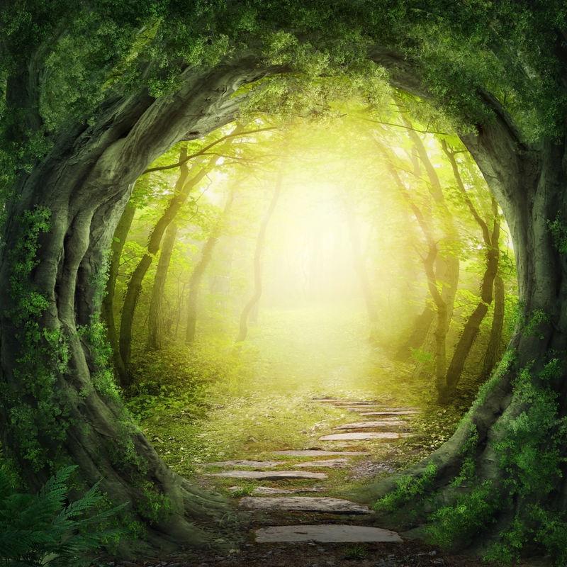 黑暗森林之路