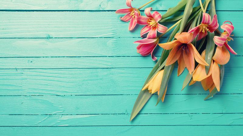 新鲜的春天红色郁金香花在绿松石漆的木板上-选择性聚焦-放置文本-彩色图像