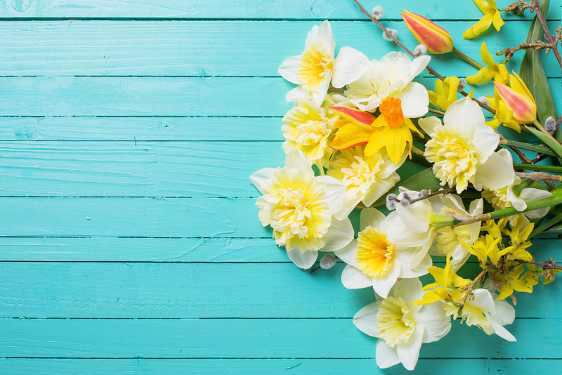 春天的鲜黄色水仙-郁金香花在绿色的木板上-选择性聚焦-放置文本