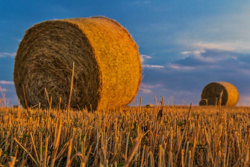 农业农村背景