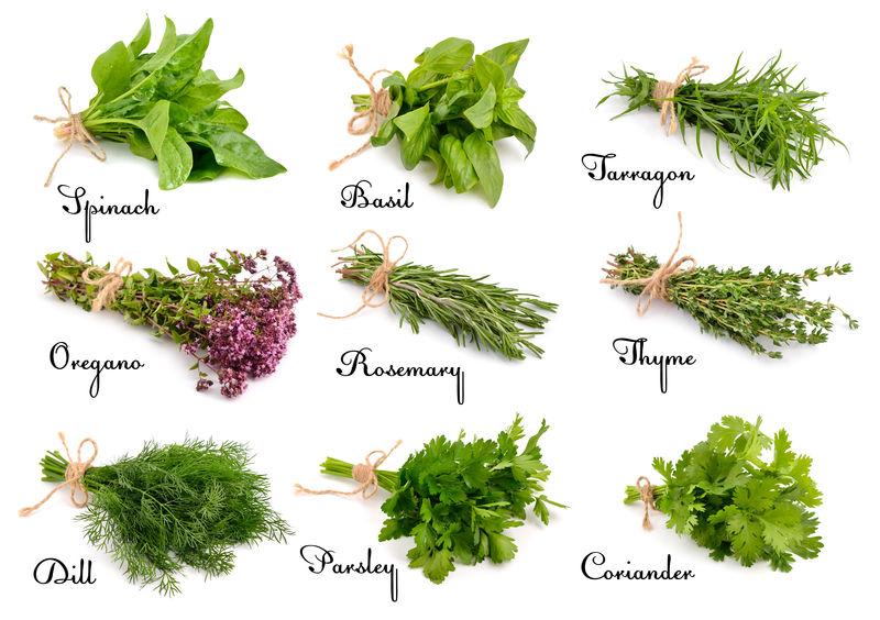 收集烹饪用草药和香料-白底隔离
