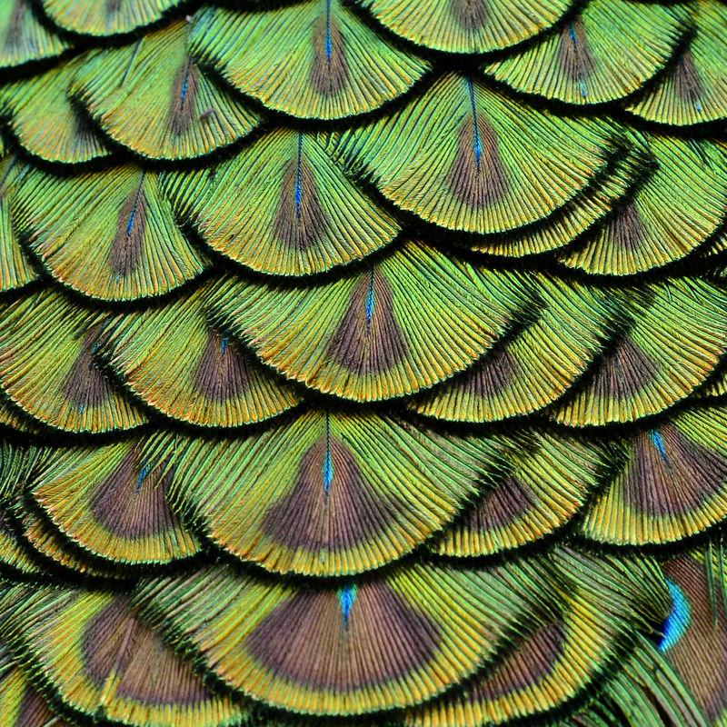 大背景纹理中绿色孔雀羽毛的特写镜头