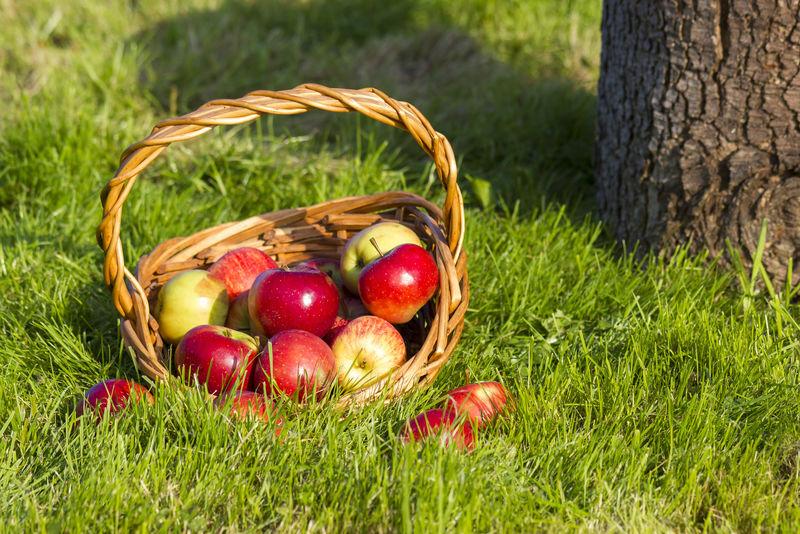 篮子里的新鲜苹果