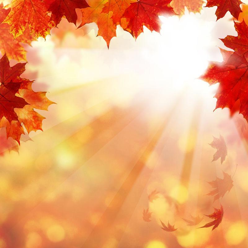 张学松照片_黄色的树叶图片-秋天的黄叶素材-高清图片-摄影照片-寻图免费 ...