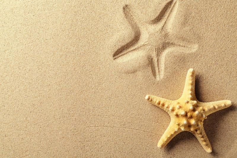 在沙滩上留下印记的贝壳