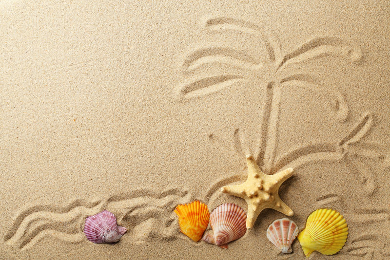 以沙为背景的贝壳