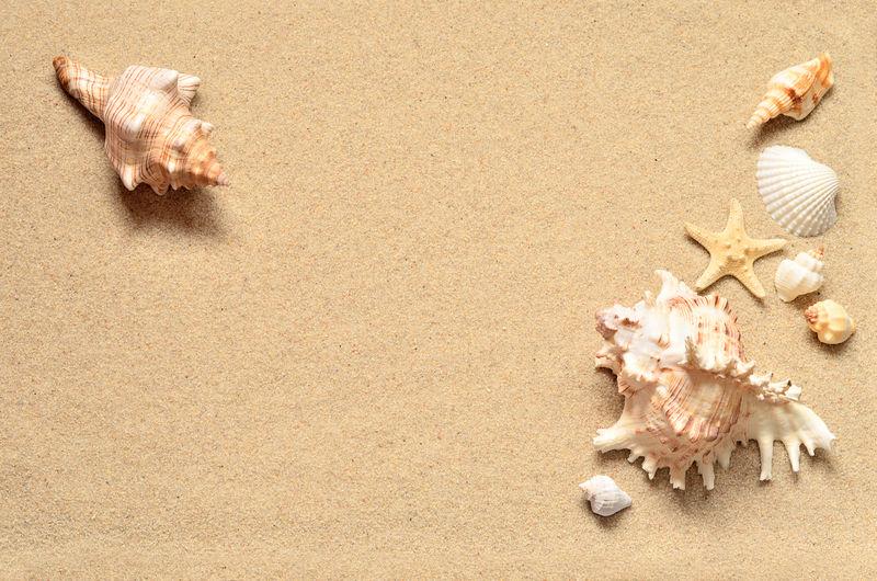 夏日海滩-沙滩上的贝壳
